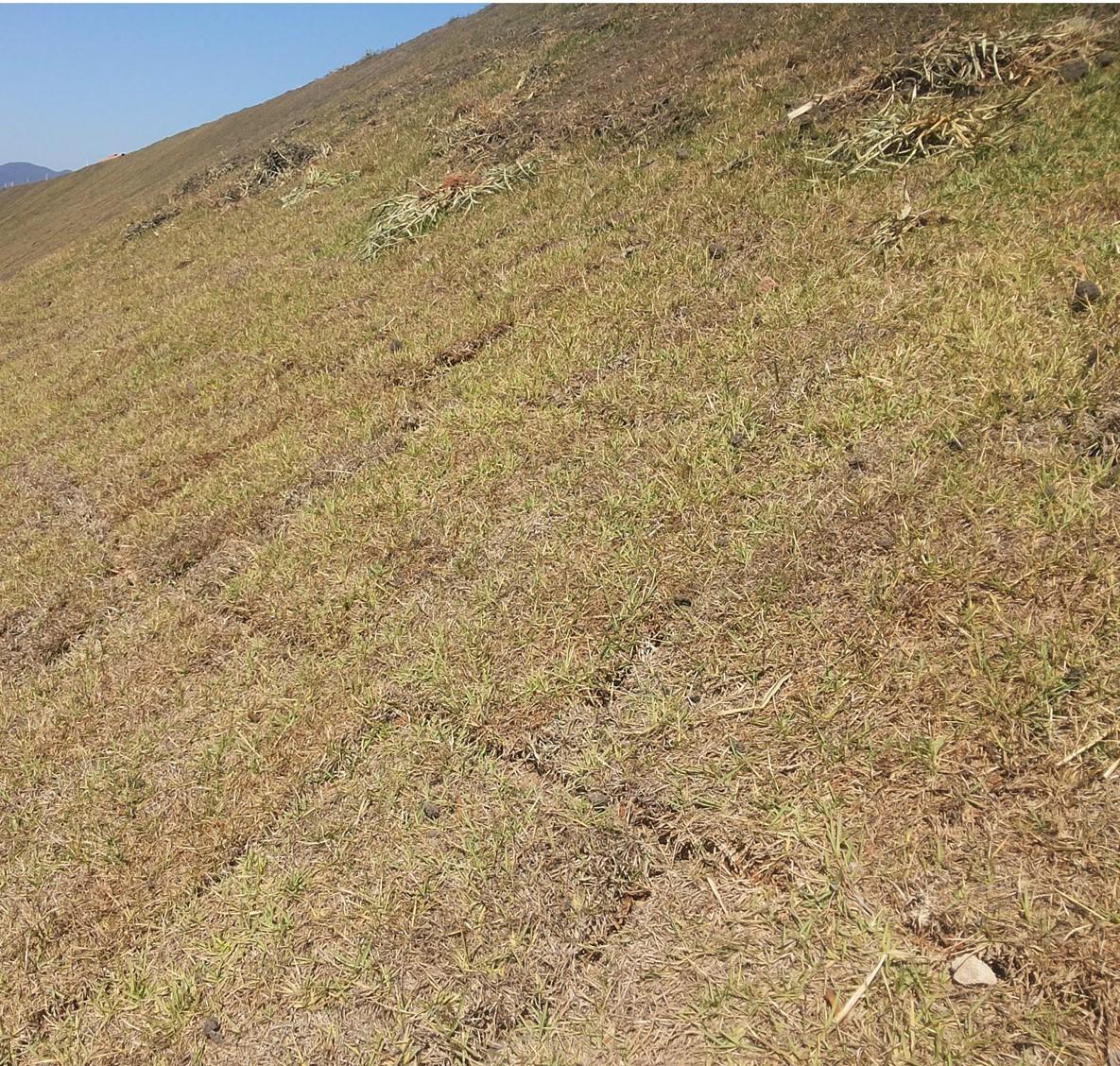 Cipasa recupera solo e gramados com fertilizante orgânico SaneFértil