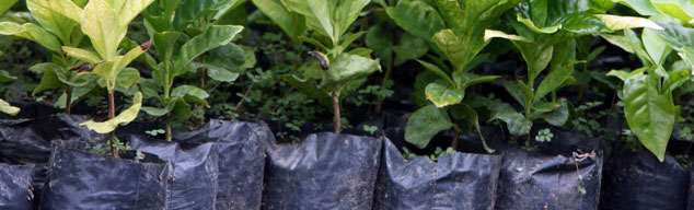 fertilizante orgânico