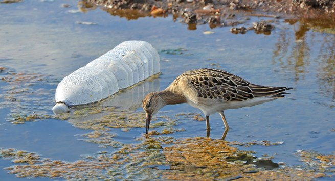 5 ações para evitar autuações ambientais