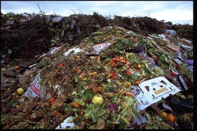 Metade da comida produzida no mundo vai parar no lixo