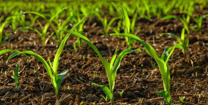 Tecnologias sustentáveis reduzem custos na adubação de lavouras